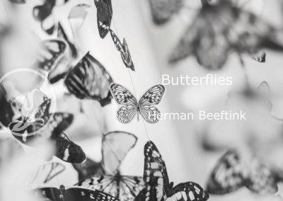Herman Beeftink – Butterflies