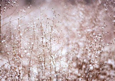 Tchaikovsky – Dance of the Sugar Plum Fairy